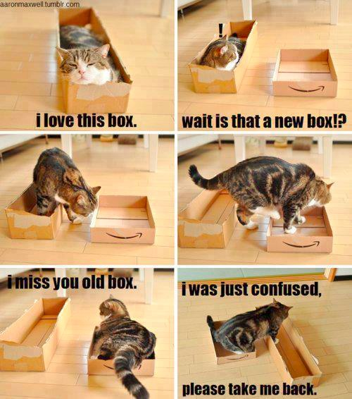 Relationships Are Like Cats And Boxes
