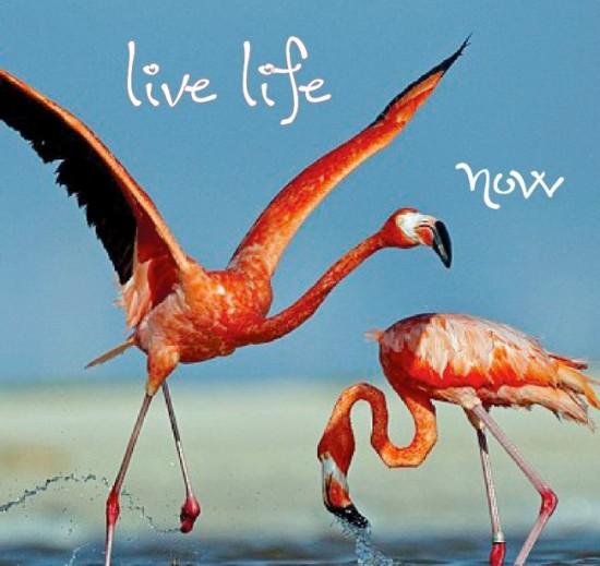 live life now