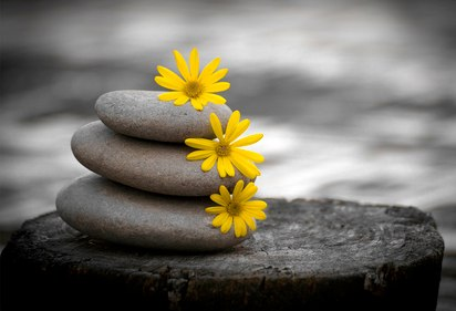 zen stones and daisies